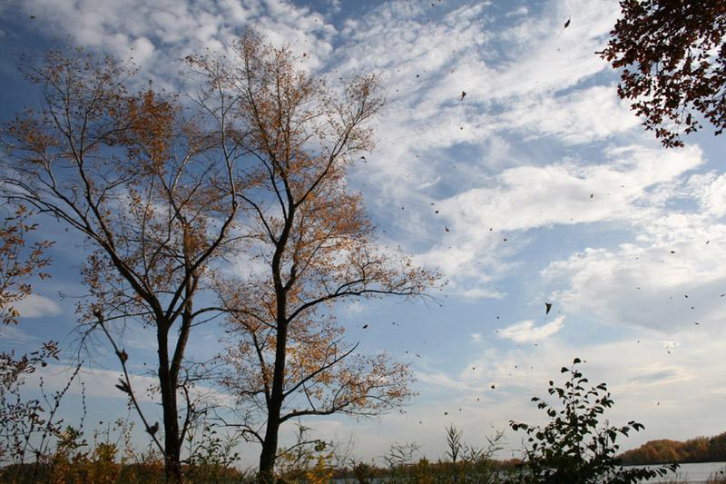 """фото """"Осень. Листопад"""" метки: пейзаж, природа, осень, цветы"""
