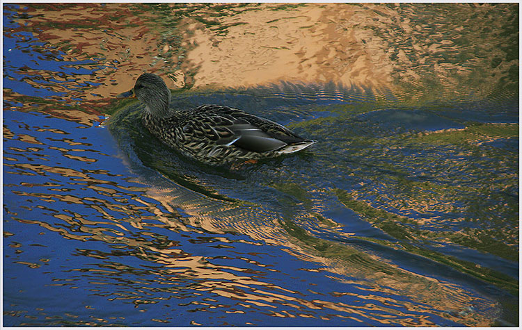 """фото """"В гости к Сказке..."""" метки: пейзаж, природа, вода, дикие животные"""