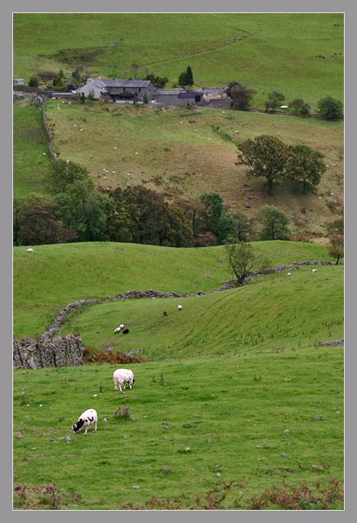 "фото ""Белые на зеленом."" метки: пейзаж, путешествия, Европа"