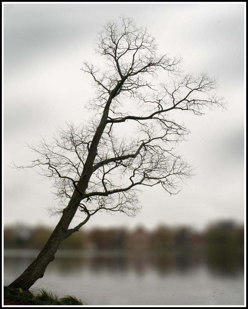 """фото """"Диагональ II, осень"""" метки: пейзаж, вода, осень"""