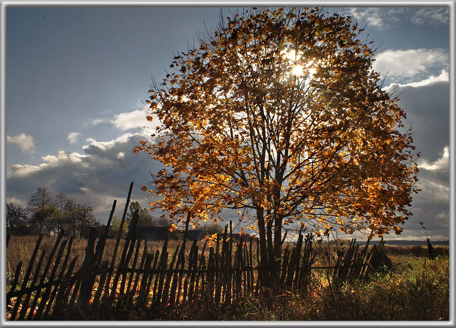 """фото """"КЛЁноВОЕ настроение :)"""" метки: пейзаж, осень"""