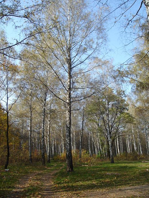 """фото """"золотая осень в городе"""" метки: ,"""