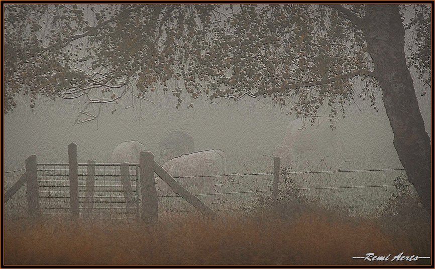 """фото """"cows in the fog"""" метки: пейзаж, природа, домашние животные, осень"""