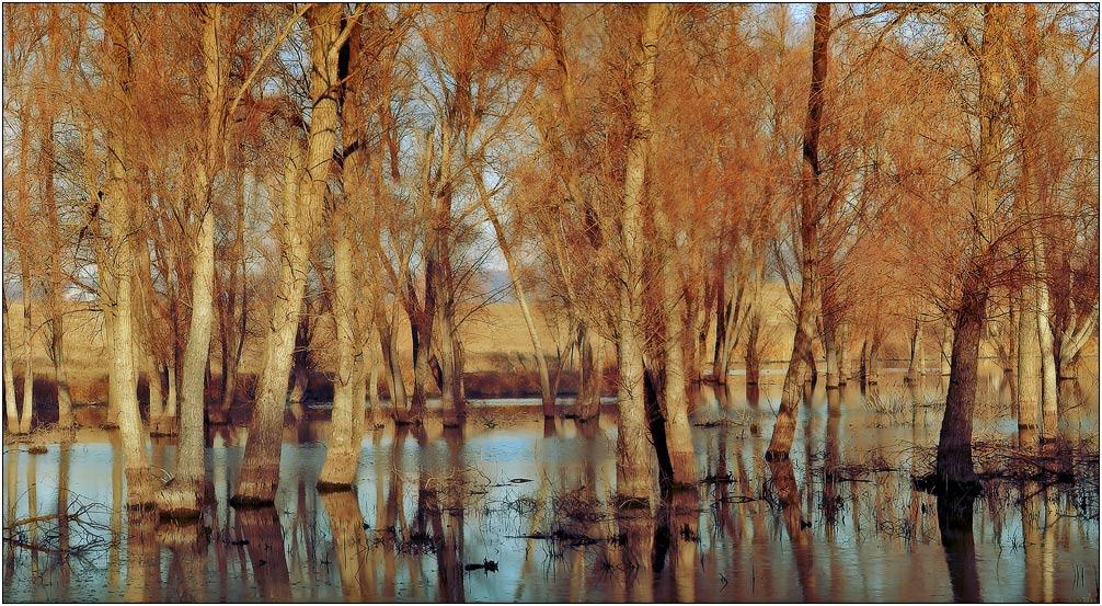 """фото """"Рыжая оcень..."""" метки: пейзаж, осень"""
