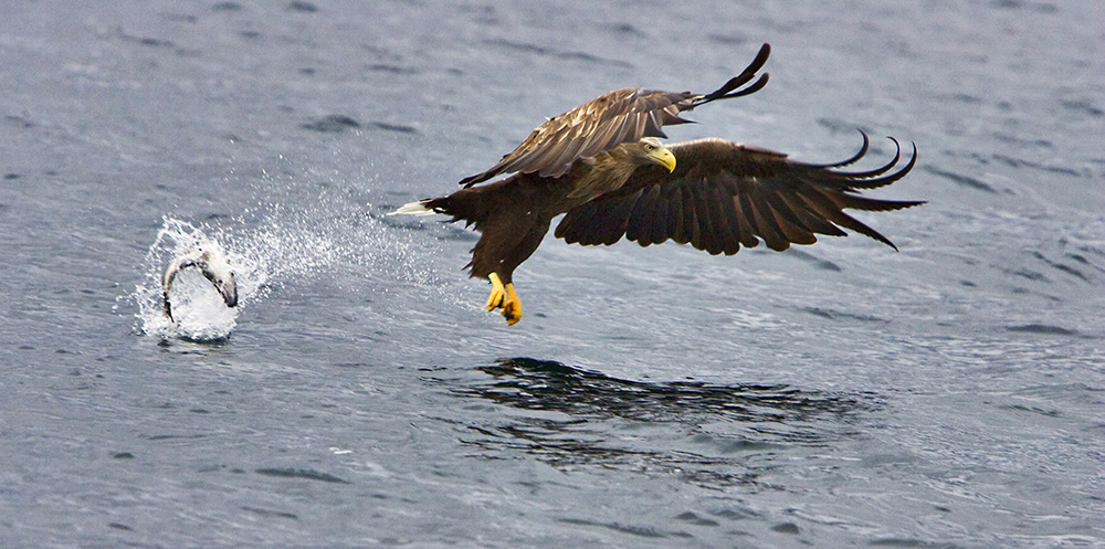 "фото ""You can,t win them all....."" метки: природа, путешествия, Европа, дикие животные"