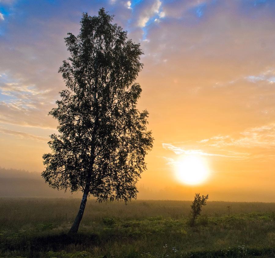 """фото """"Во-поле березка стояла..."""" метки: пейзаж, закат"""