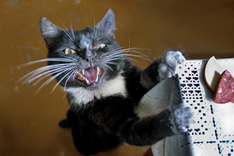 Знаки, шутки про кошек картинки