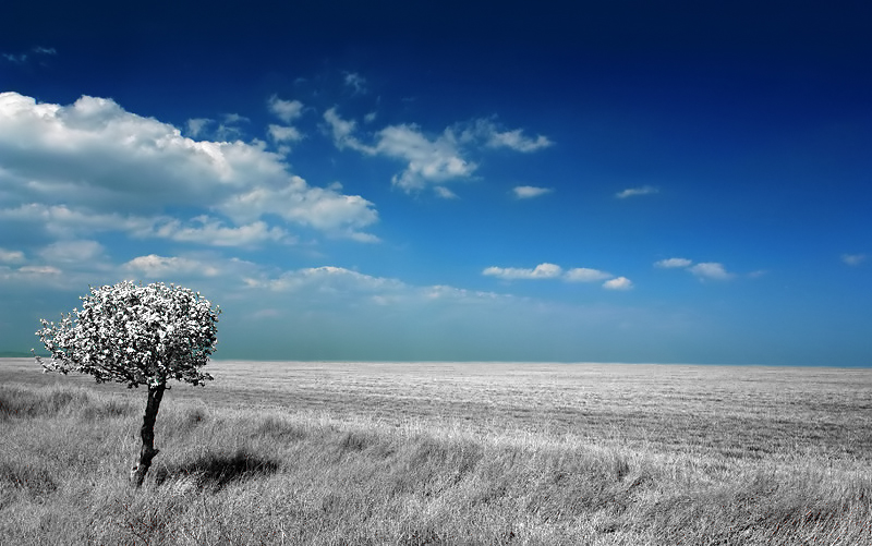 "photo ""***"" tags: landscape, clouds, forest"