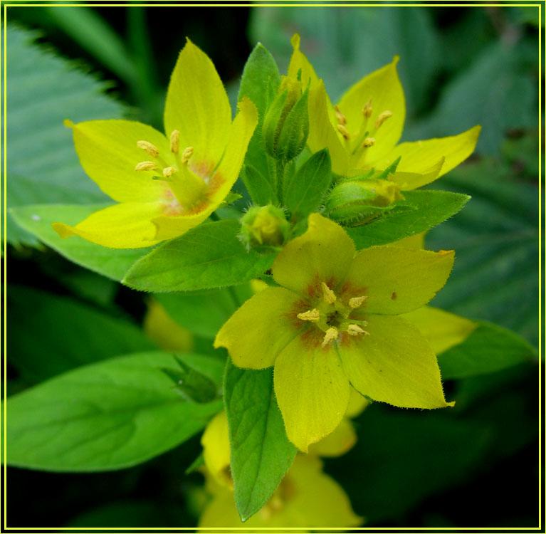 Фото желтые цветы метки природа