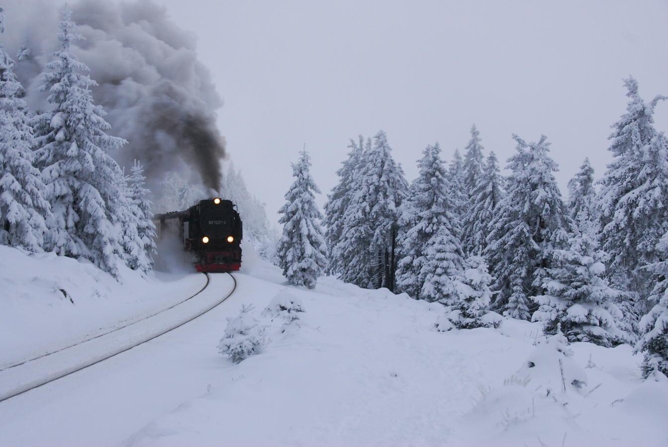 """фото """"The train is comming"""" метки: пейзаж, лес"""
