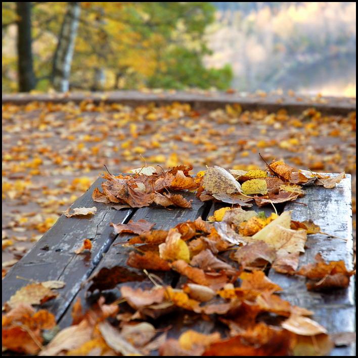 гулял сентябрь кружил листвой картинки увидел синих занавесках