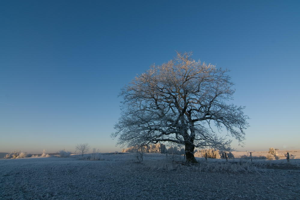 "фото ""the waiting tree"" метки: пейзаж, зима"
