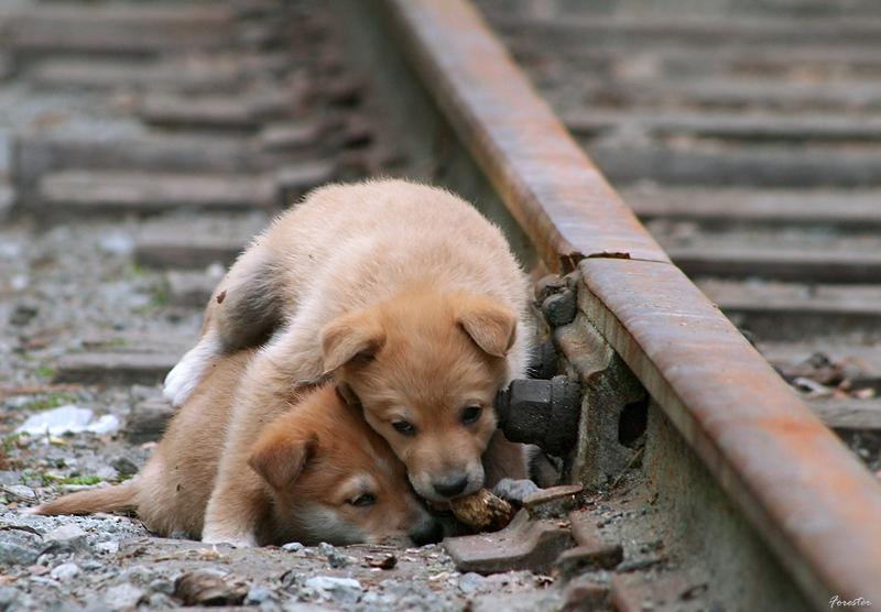 грустные картинки бездомных животных до слез хита