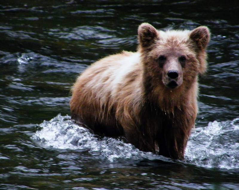 картинки мокрый медведь крупнее
