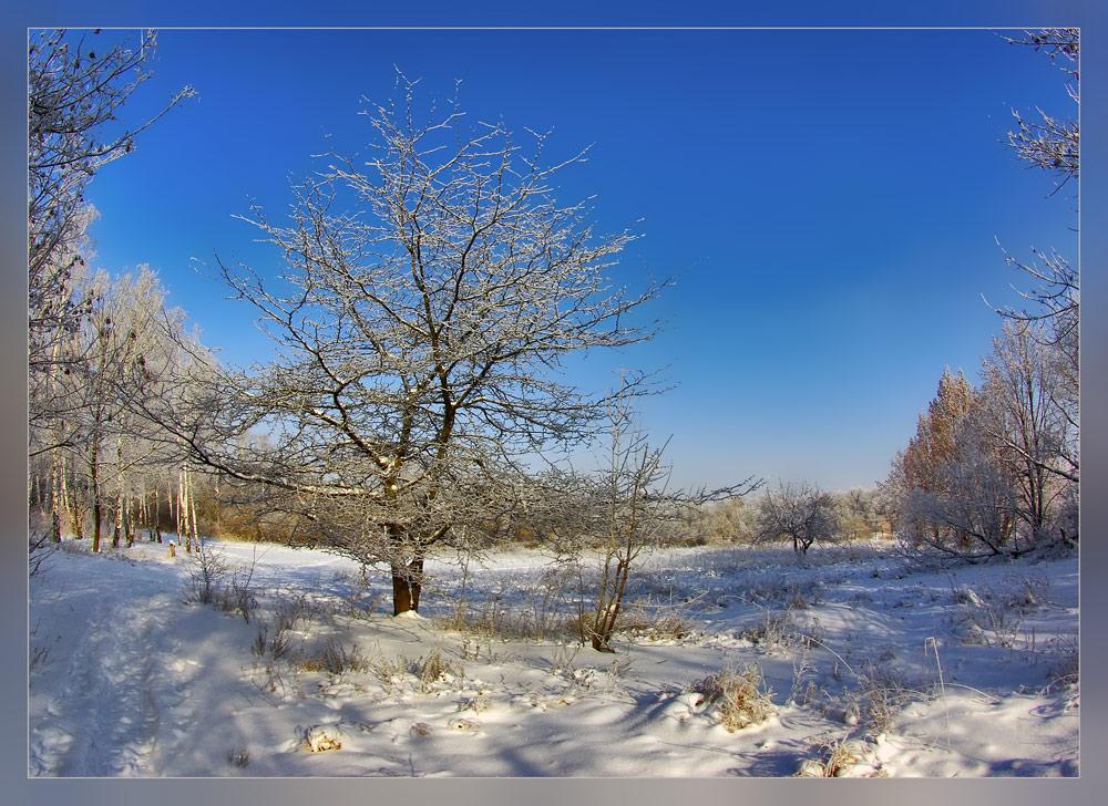 "фото ""Клён заледенелый (в цвете)"" метки: пейзаж, зима, лес"