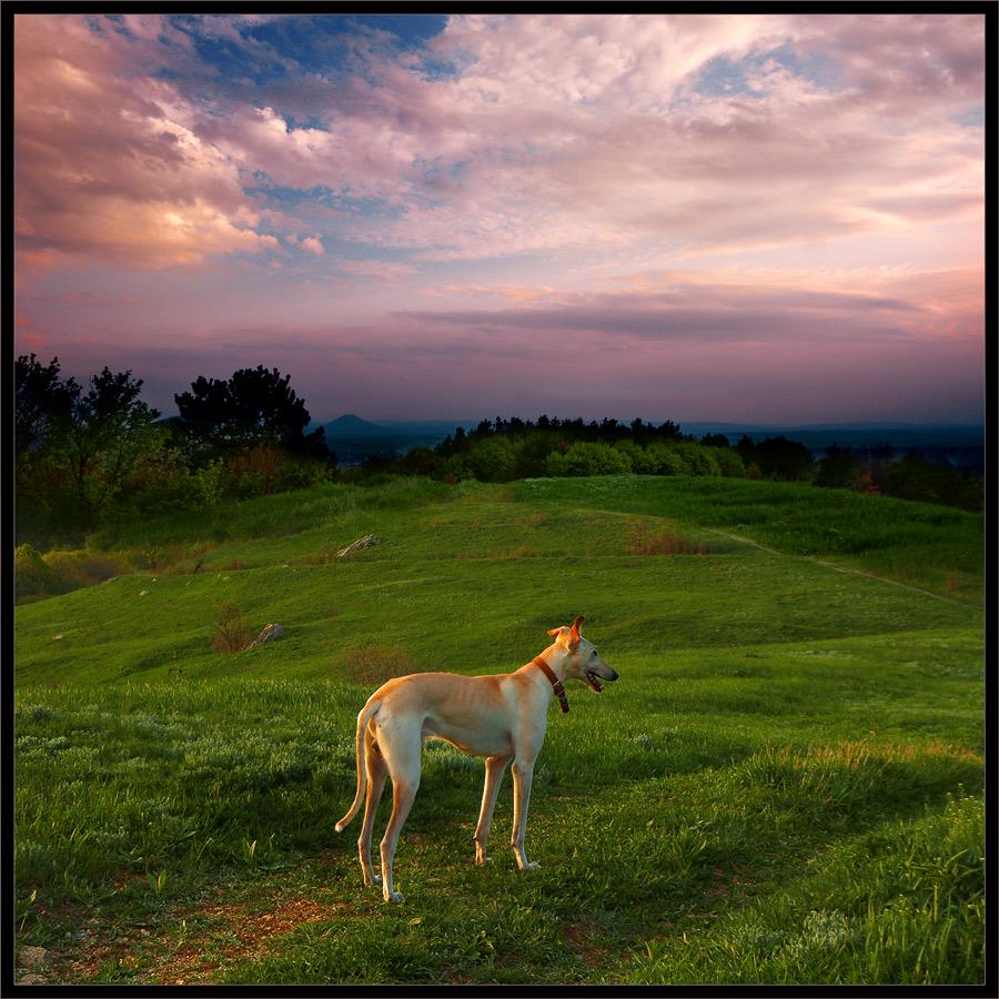 """photo """"Walk on sundown"""" tags: landscape, sunset"""