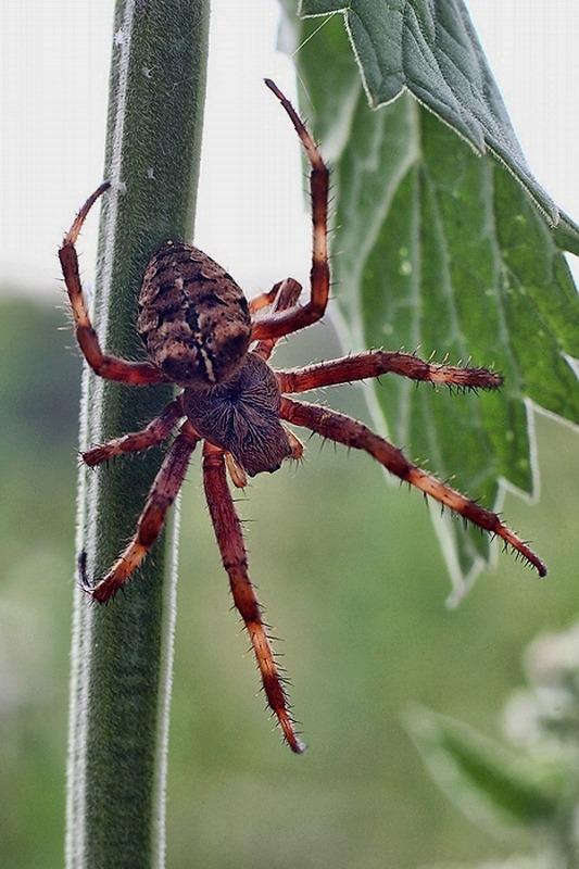 картинки жуков и пауков всего дозволить вам
