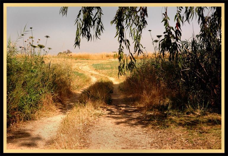 "photo ""***"" tags: landscape, autumn, summer"