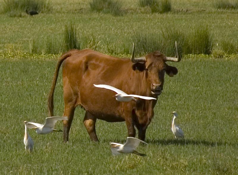 "фото ""SYMBIOSIS"" метки: природа, репортаж, домашние животные"