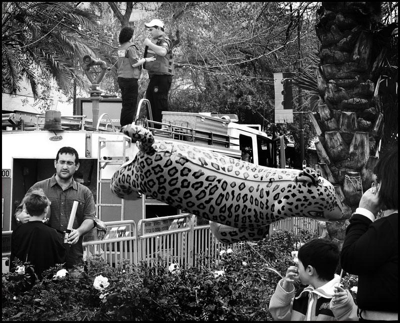 "фото ""Вот тихий тигрик пролетел ..."" метки: жанр,"