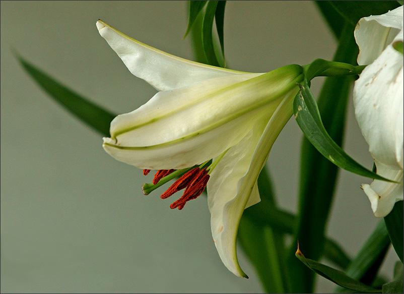 """фото """"* * *"""" метки: природа, цветы"""