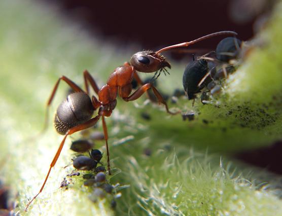 """фото """"Пастушок"""" метки: макро и крупный план, природа, насекомое"""
