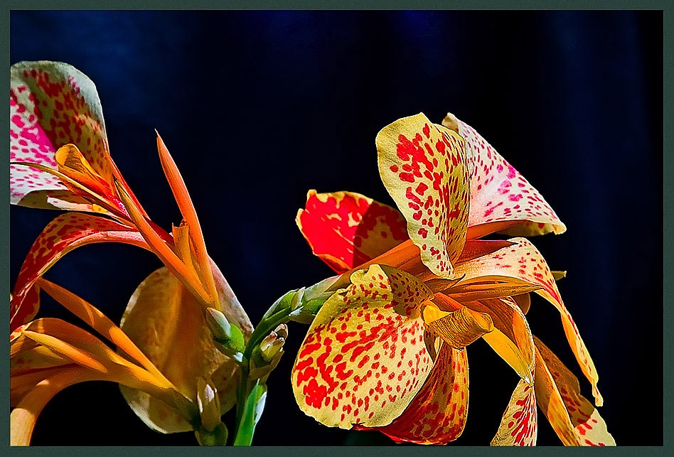 "photo ""Miss Matylda"" tags: nature, flowers"