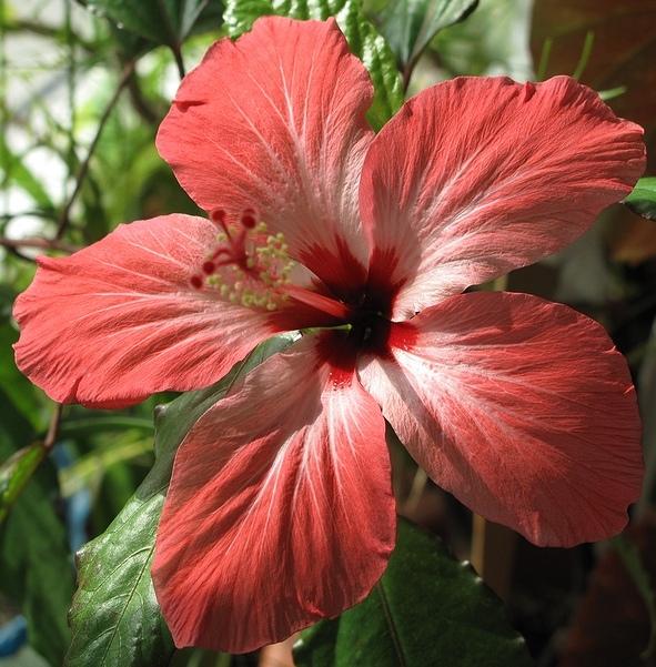 """фото """"Красна девица"""" метки: природа, макро и крупный план, цветы"""