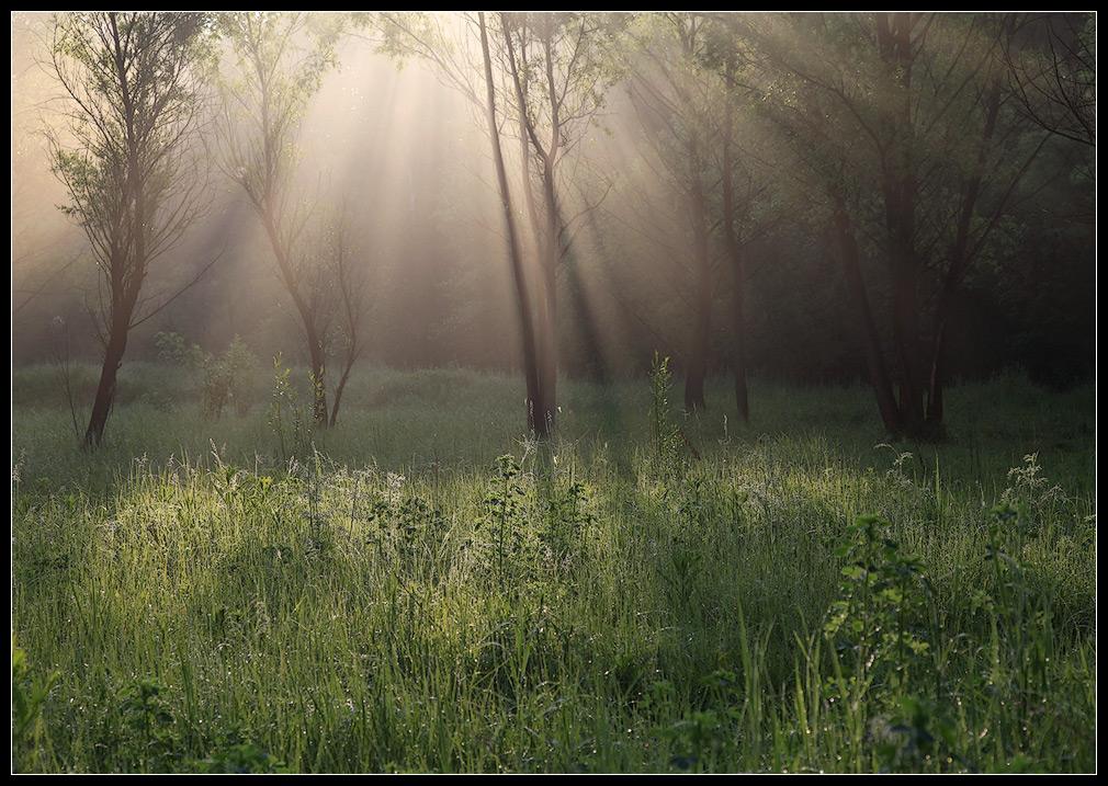 работа фото в лесу после дождя основе силикатного стекла