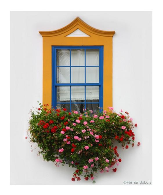 "фото ""flowered window"" метки: природа, цветы"