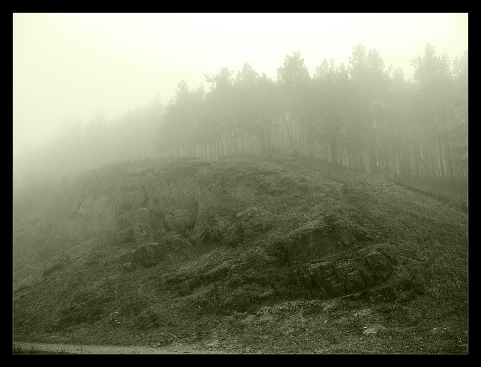 """фото """"***"""" метки: пейзаж, черно-белые, лес"""