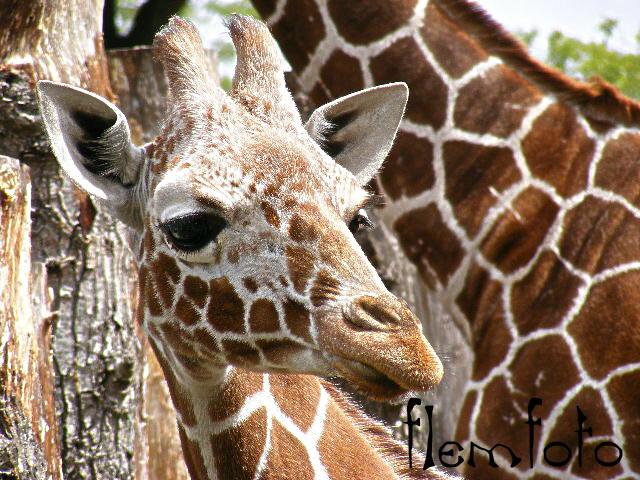"""фото """"Africa."""" метки: природа, дикие животные"""