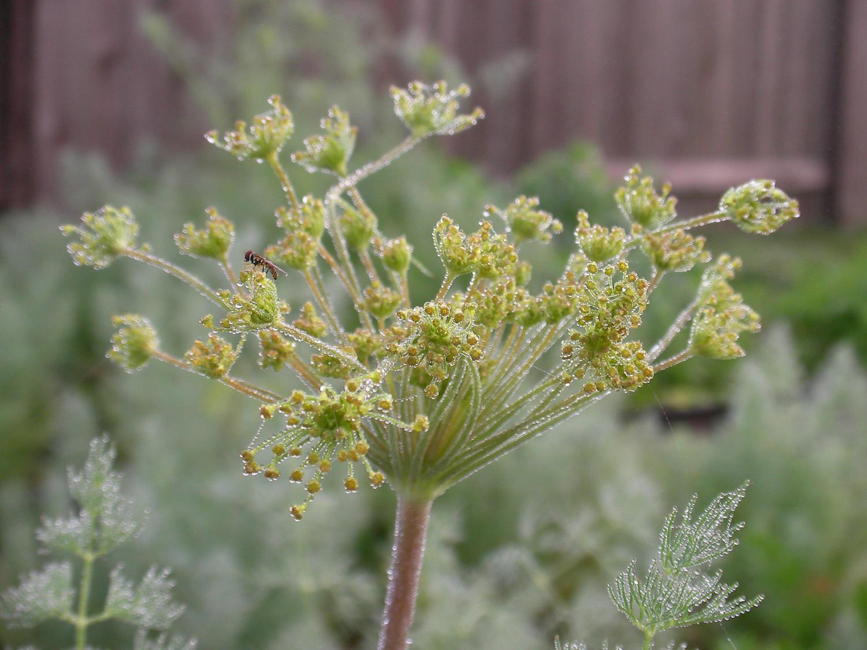 """фото """"Morning Dew"""" метки: природа, макро и крупный план, цветы"""