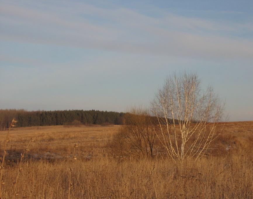 """фото """"Январь"""" метки: пейзаж, зима"""