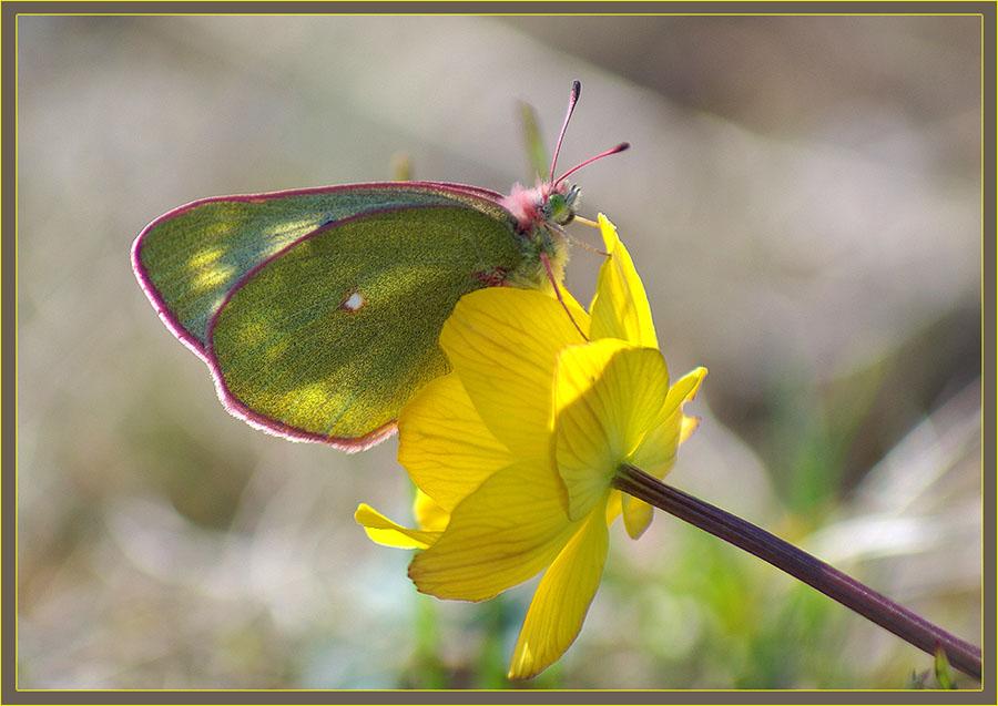 """фото """"Летний этюд"""" метки: природа, насекомое, цветы"""