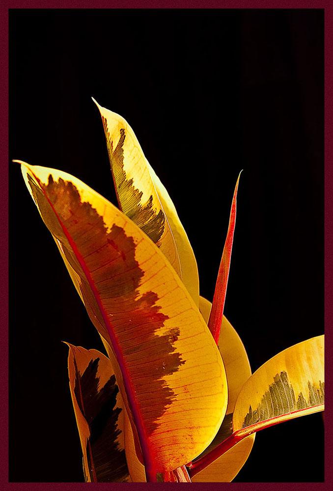 "фото ""Prometeus"" метки: природа, цветы"