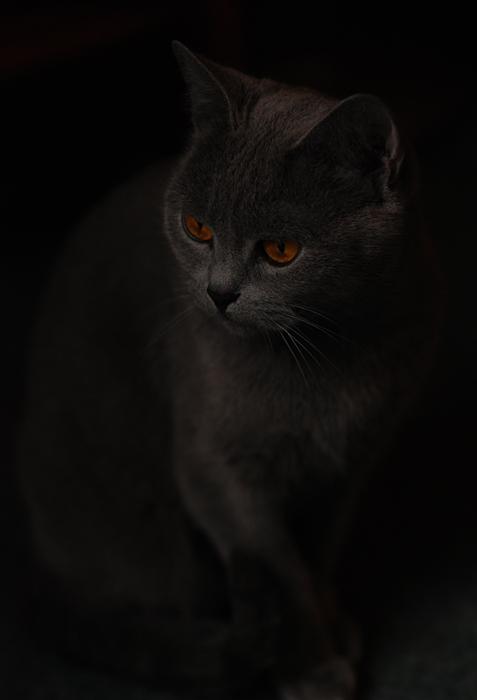 "фото ""Cat in Dreams"" метки: природа, домашние животные"