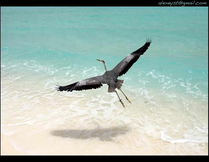 "photo ""цапля"" tags: nature, travel, wild animals"