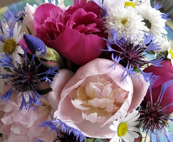 """фото """"Из июньского..."""" метки: природа, цветы"""