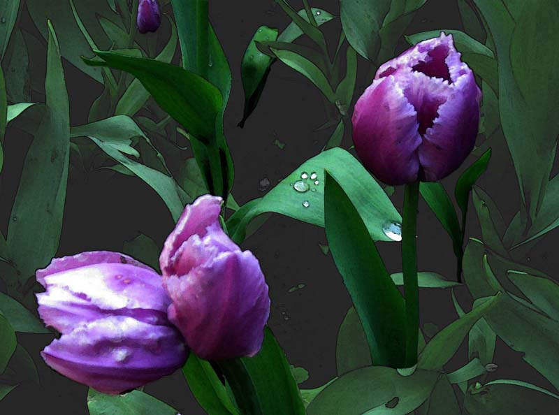 "фото ""Тюльпаны"" метки: природа, натюрморт, цветы"