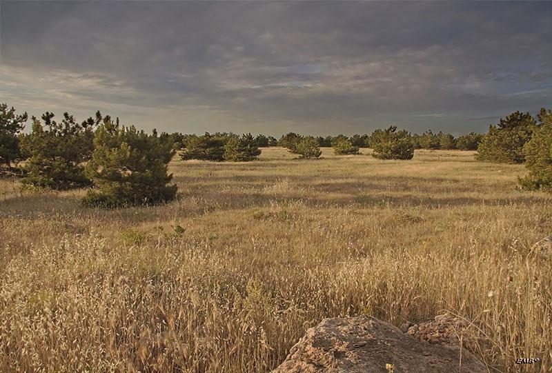 """фото """"пасмурный вечер"""" метки: пейзаж, лес, лето"""