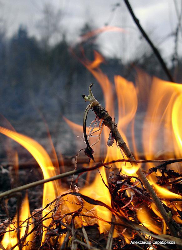 "photo ""огонь,стихия,весна,природа"" tags: nature, genre,"
