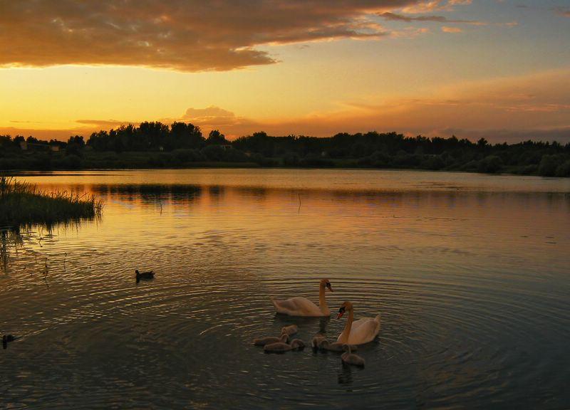 """фото """"на закате"""" метки: пейзаж, закат"""