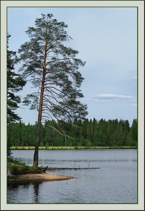 """фото """"Вечер на озере"""" метки: пейзаж, вода, лето"""