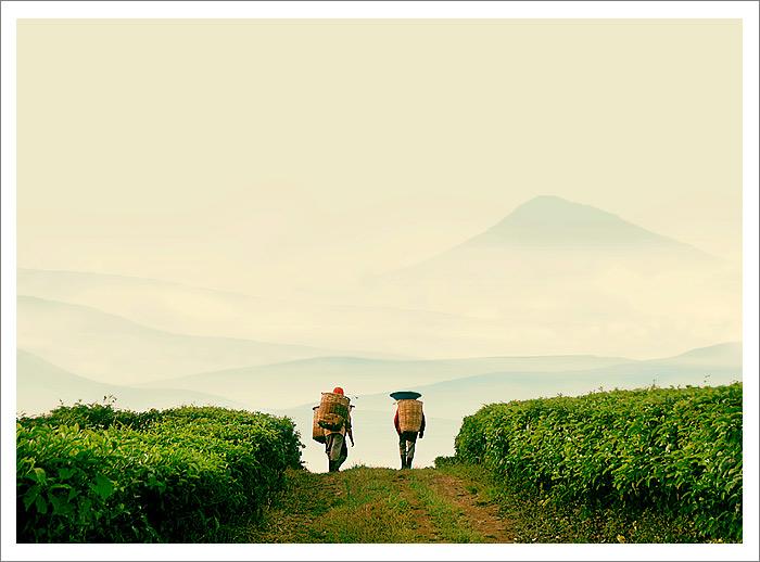 """photo """"Tea farmer"""" tags: landscape,"""