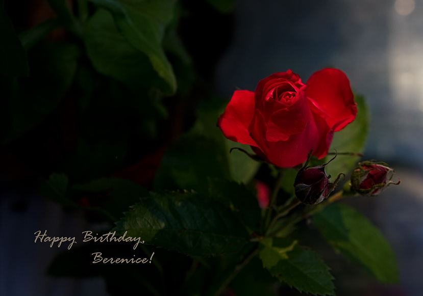 """photo """"feliz cumpleaños"""" tags: misc.,"""