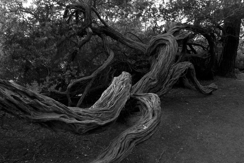 "photo ""sheshe la fame(no metter of spelling)"" tags: landscape, forest"