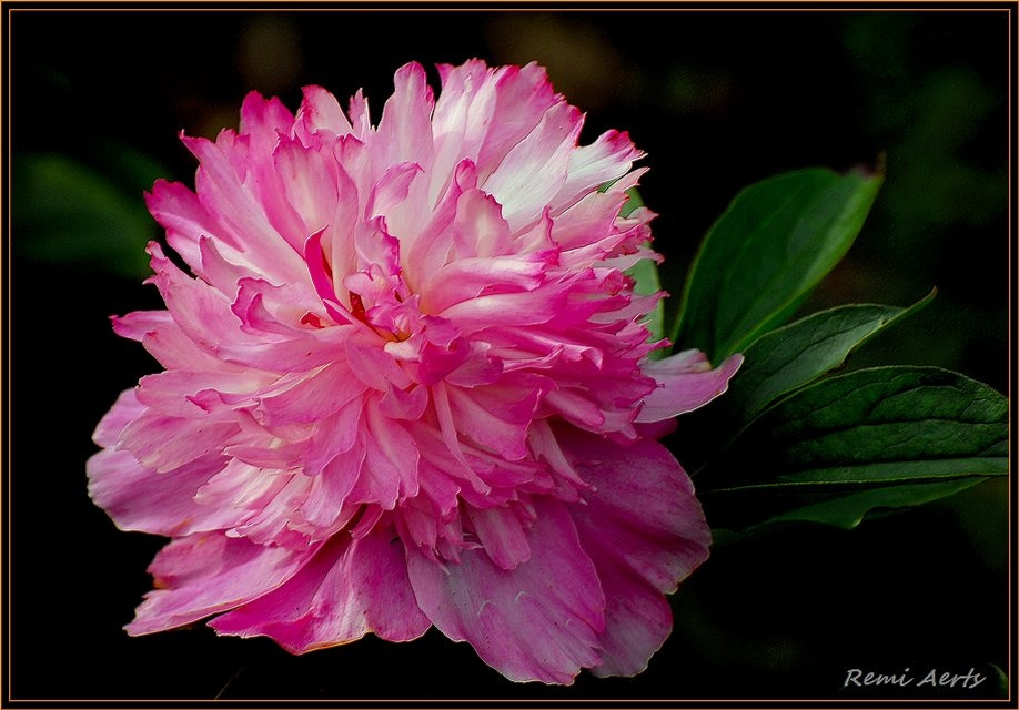 """photo """"we love flowers"""" tags: nature, macro and close-up, flowers"""