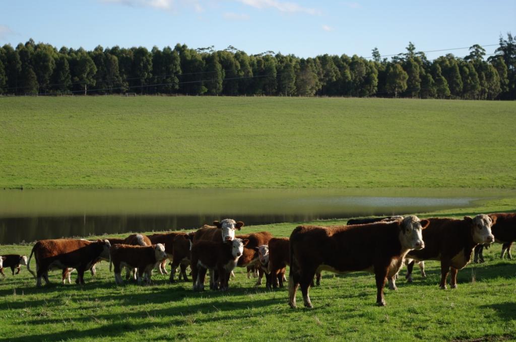 """фото """"Green pastures"""" метки: пейзаж, природа, домашние животные"""