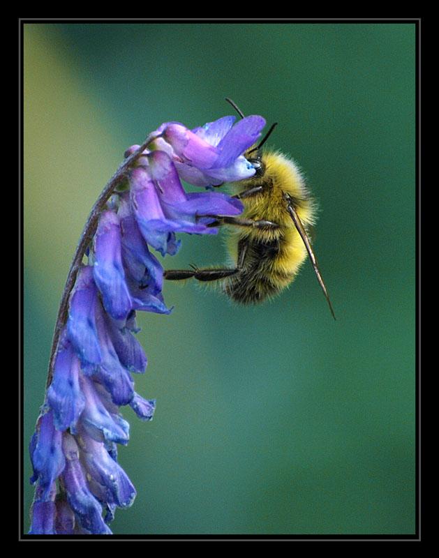"""фото """"***"""" метки: природа, макро и крупный план, насекомое"""